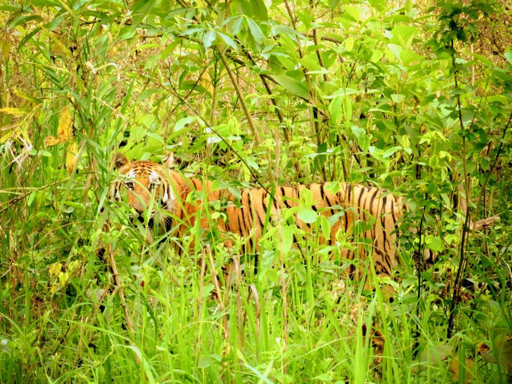 Bardia National Park Tour